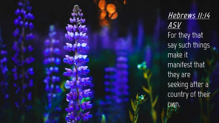 Picture 04 - Hebrews 11:14 ASV Desktop Wallpaper - For they that say such things make it manifest - Desktop Bible Verse Wallpaper