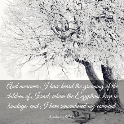 Picture 03 - Exodus 6:5 ASV - And moreover I have heard the groaning of the - Bible Verse Picture