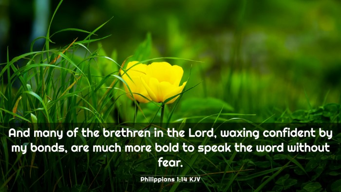 Picture 03 - Philippians 1:14 KJV 4K Wallpaper - And many of the brethren in the Lord, waxing - 4K Wallpaper Bible Verse