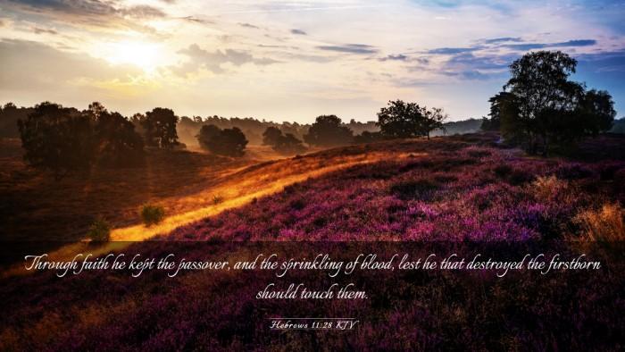 Picture 03 - Hebrews 11:28 KJV Desktop Wallpaper - Through faith he kept the passover, and the - Desktop Bible Verse Wallpaper