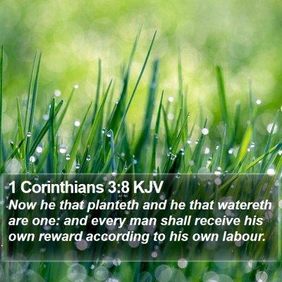 1 Corinthians 3:8 KJV Bible Verse Image