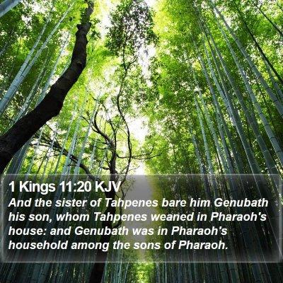 1 Kings 11:20 KJV Bible Verse Image