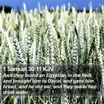 1 Samuel 30:11 KJV Bible Verse Image