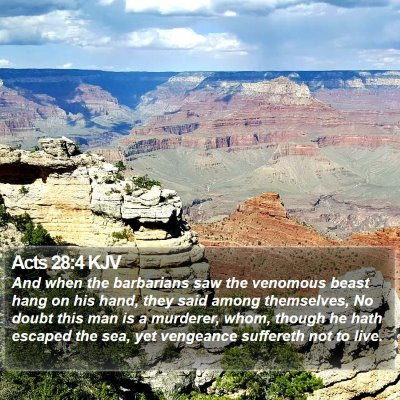Acts 28:4 KJV Bible Verse Image