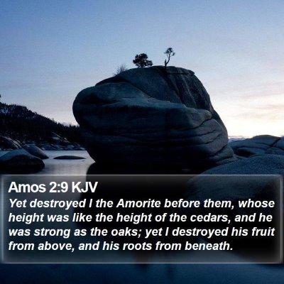 Amos 2:9 KJV Bible Verse Image
