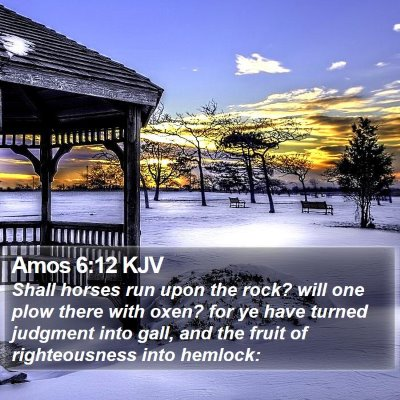 Amos 6:12 KJV Bible Verse Image