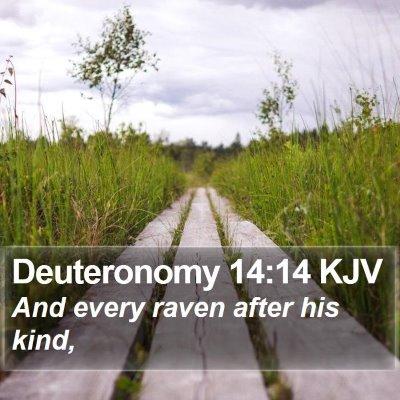 Deuteronomy 14:14 KJV Bible Verse Image