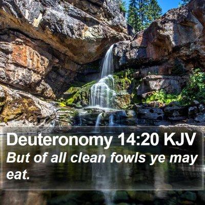 Deuteronomy 14:20 KJV Bible Verse Image