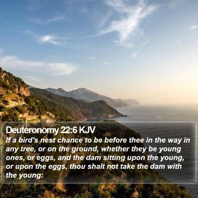 Deuteronomy 22:6 KJV Bible Verse Image