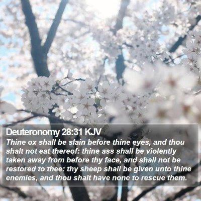Deuteronomy 28:31 KJV Bible Verse Image