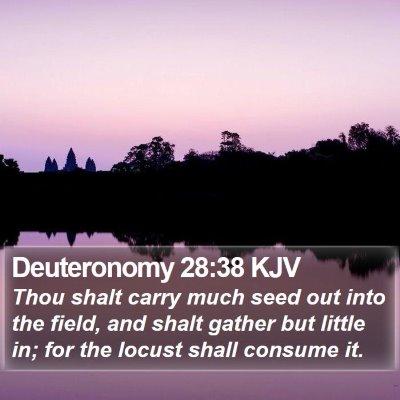 Deuteronomy 28:38 KJV Bible Verse Image