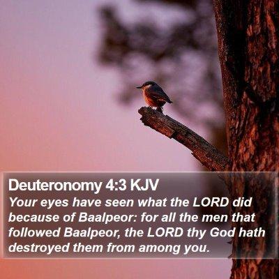 Deuteronomy 4:3 KJV Bible Verse Image