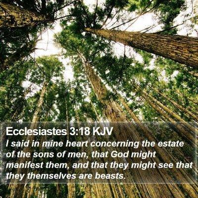 Ecclesiastes 3:18 KJV Bible Verse Image