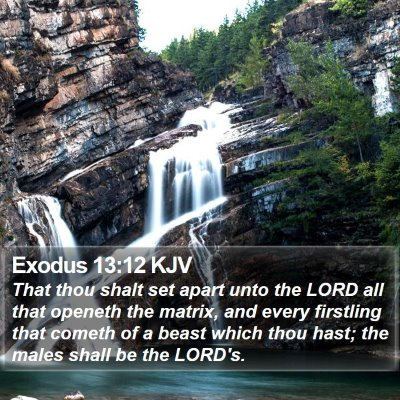 Exodus 13:12 KJV Bible Verse Image