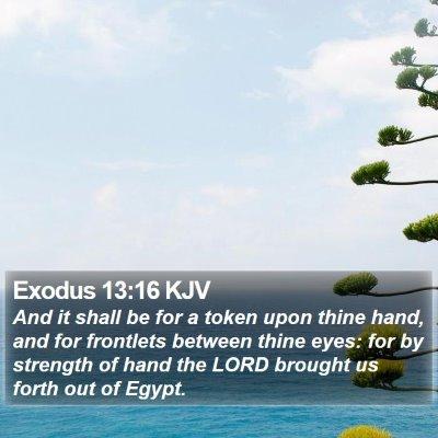 Exodus 13:16 KJV Bible Verse Image