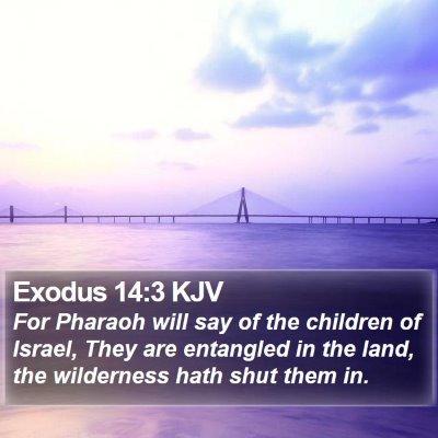 Exodus 14:3 KJV Bible Verse Image