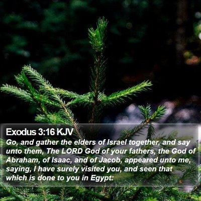 Exodus 3:16 KJV Bible Verse Image