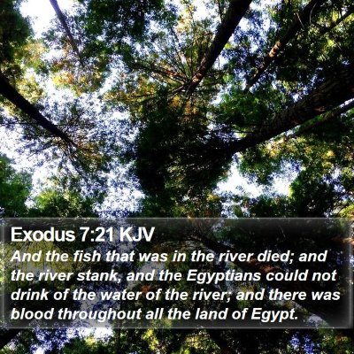 Exodus 7:21 KJV Bible Verse Image