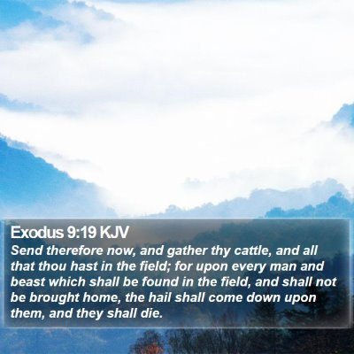 Exodus 9:19 KJV Bible Verse Image