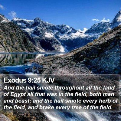 Exodus 9:25 KJV Bible Verse Image