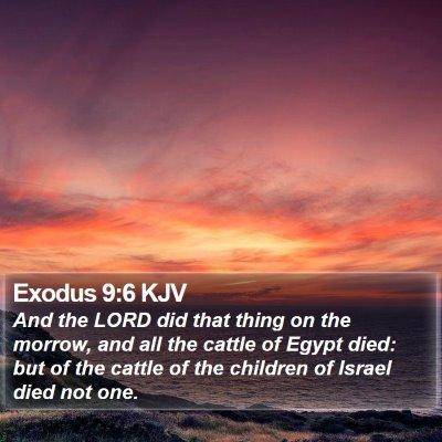 Exodus 9:6 KJV Bible Verse Image