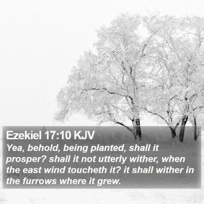 Ezekiel 17:10 KJV Bible Verse Image