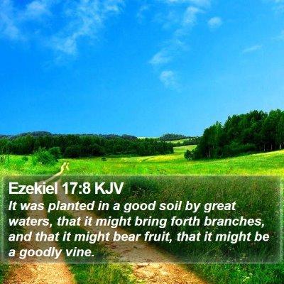 Ezekiel 17:8 KJV Bible Verse Image