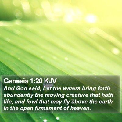 Genesis 1:20 KJV Bible Verse Image