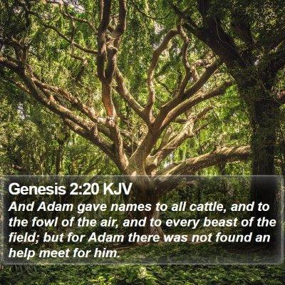 Genesis 2:20 KJV Bible Verse Image