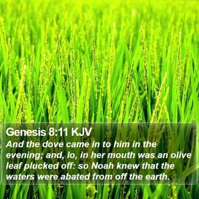 Genesis 8:11 KJV Bible Verse Image