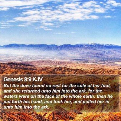 Genesis 8:9 KJV Bible Verse Image