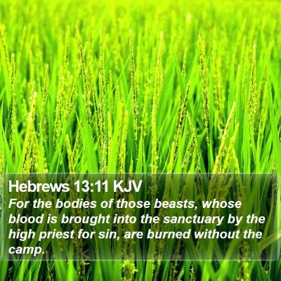 Hebrews 13:11 KJV Bible Verse Image