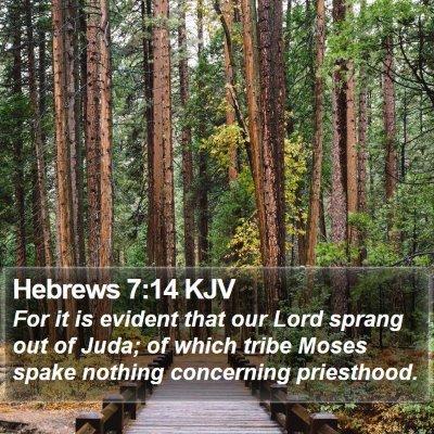 Hebrews 7:14 KJV Bible Verse Image