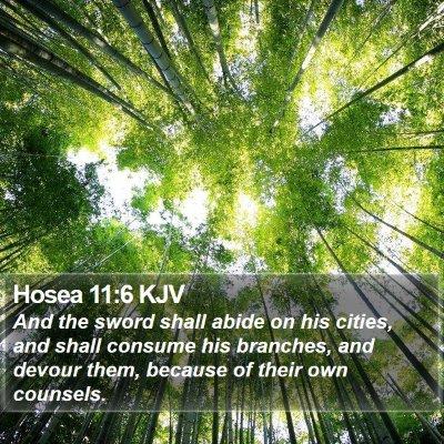 Hosea 11:6 KJV Bible Verse Image