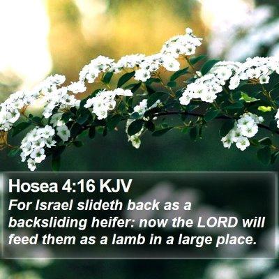 Hosea 4:16 KJV Bible Verse Image