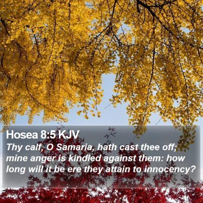 Hosea 8:5 KJV Bible Verse Image