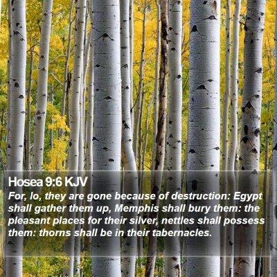 Hosea 9:6 KJV Bible Verse Image