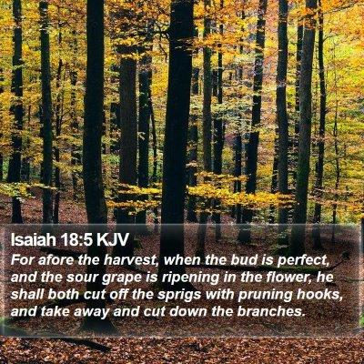 Isaiah 18:5 KJV Bible Verse Image