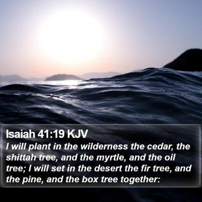 Isaiah 41:19 KJV Bible Verse Image