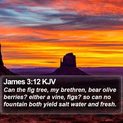 James 3:12 KJV Bible Verse Image