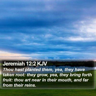 Jeremiah 12:2 KJV Bible Verse Image