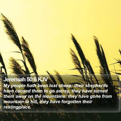 Jeremiah 50:6 KJV Bible Verse Image