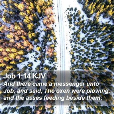 Job 1:14 KJV Bible Verse Image