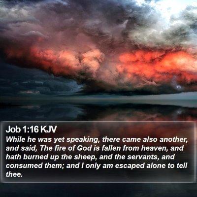 Job 1:16 KJV Bible Verse Image