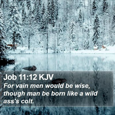 Job 11:12 KJV Bible Verse Image