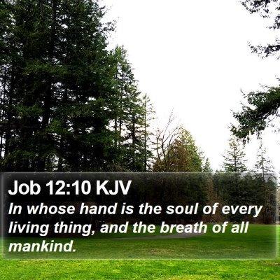 Job 12:10 KJV Bible Verse Image