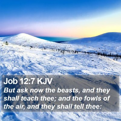 Job 12:7 KJV Bible Verse Image