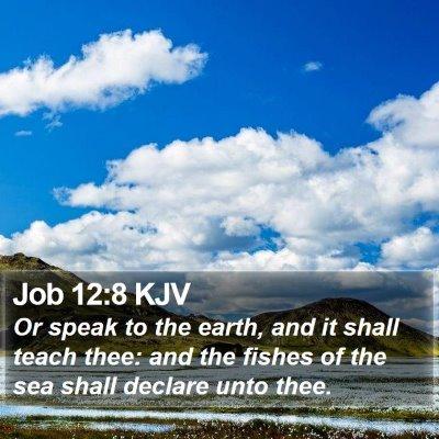 Job 12:8 KJV Bible Verse Image