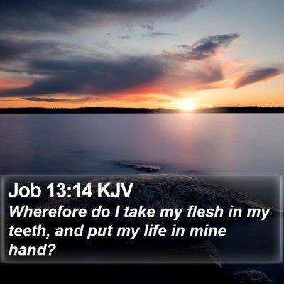Job 13:14 KJV Bible Verse Image