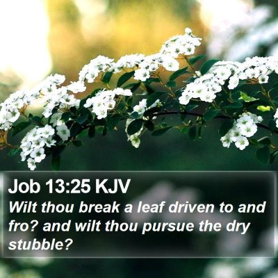 Job 13:25 KJV Bible Verse Image
